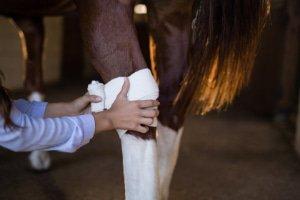 Health Horse