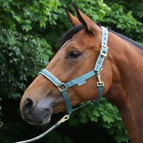 Bucas  Foal Halter Dublin Mallard Green