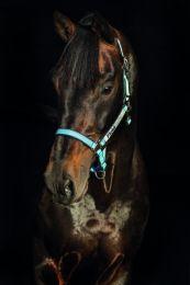Horseware Field Safe Headcollar Cob Light blue