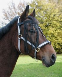 Hofman Fly-brow belt Horse