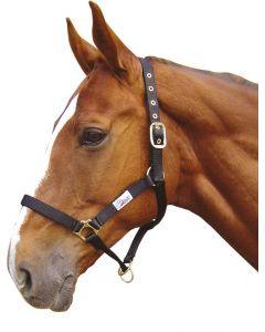Harry's Horse Halter controller