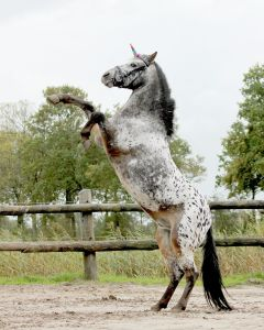 QHP unicorn horn