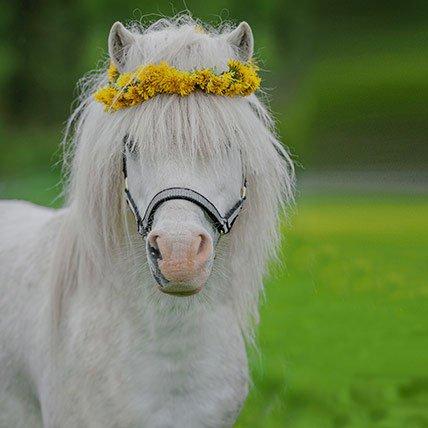 Rugs to 165cm (shetland pony)
